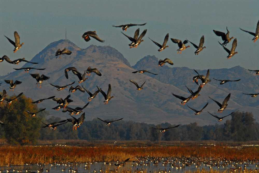 Охотники восстановили сотни водно-болотных угодий в Северной Америке с помощью  © Ducks Unlimited